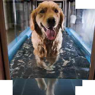 Hidroterapia2